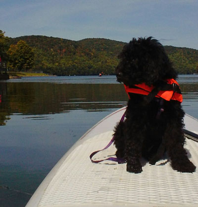 Talulah pup on her first SUP